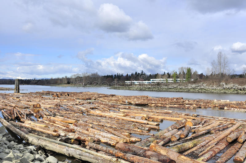 Logs on fraser river. British columbia bc stock images