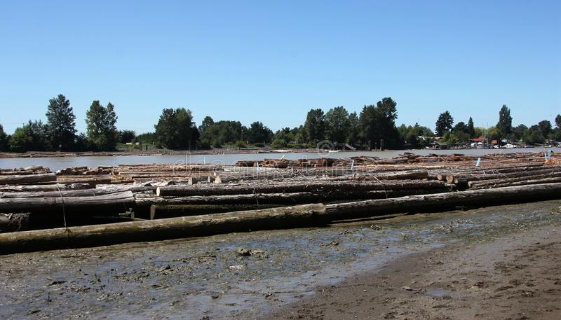 Logs on Fraser River. The picture was taken by Fraser River in BC, Canada stock photos