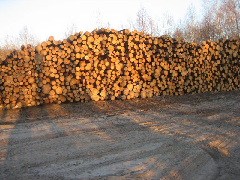 Logs grandes agora da floresta foto de stock royalty free