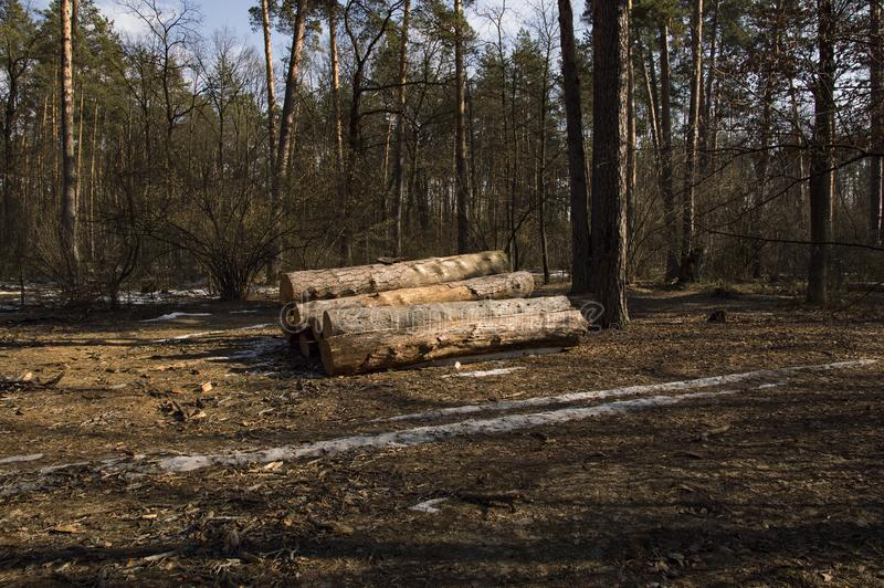 Logs of trees stacked in a large pile after deforestation. The logs of large trees are stacked in a large pile after deforestation stock photography