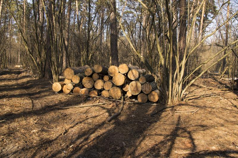 Logs of trees stacked in a large pile after deforestation. The logs of large trees are stacked in a large pile after deforestation royalty free stock photos