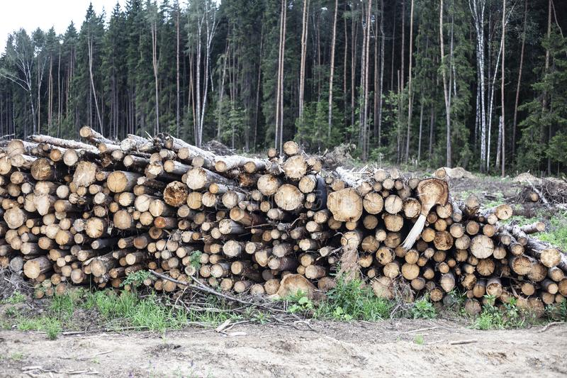 Cut down forest. Harvesting logs. royalty free stock photography