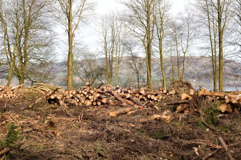Logs piled up at Loch Leven, Scotland.  stock image