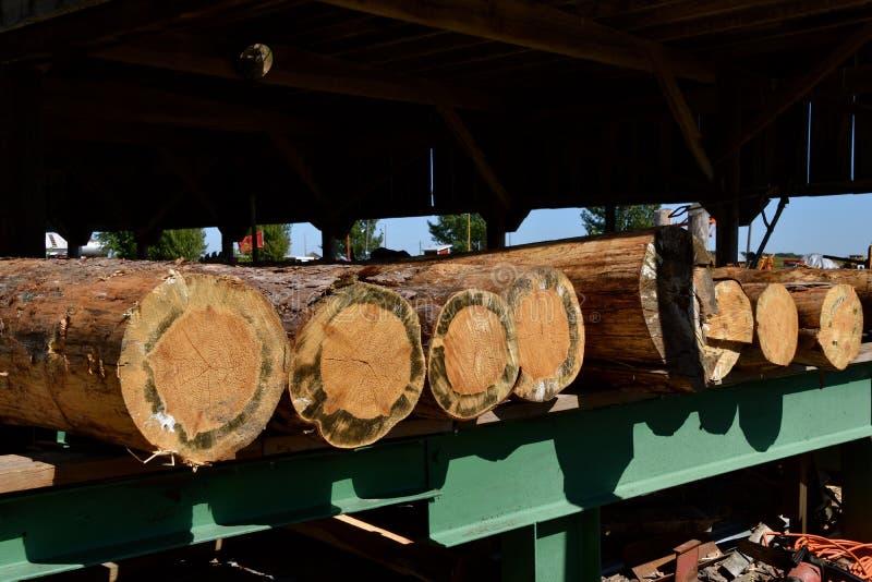 Logs que esperam para ser cortado na madeira serrada foto de stock