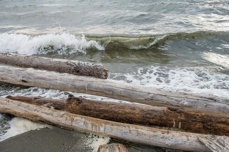 Logs And Shorebreak. A closeup shot of driftwood logs and the shorebreak in the Pacific Northwest stock image