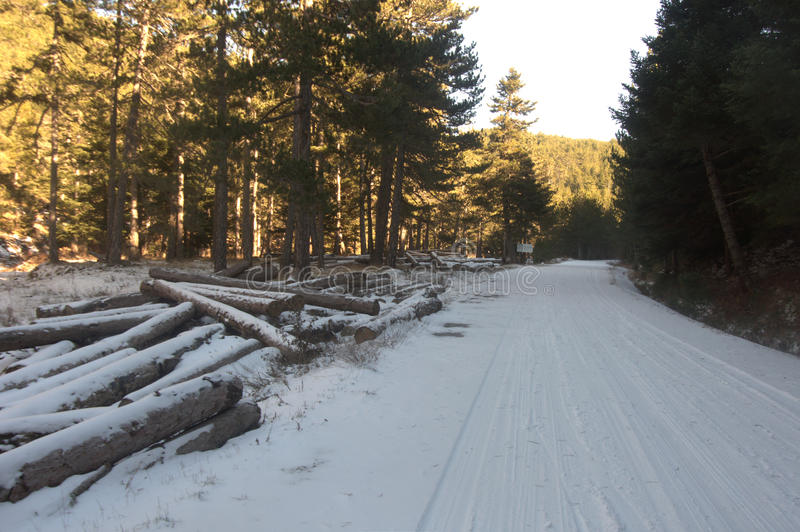 Logs in snowy road stock photography