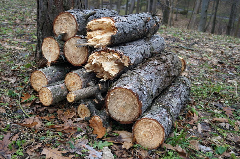 Logs stacked in a pile near a tree. Lying on the leaves and dry grass stock photography