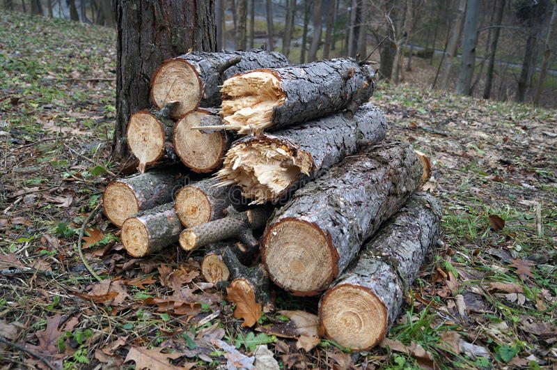 Logs stacked in a pile near a tree. Lying on the leaves and dry grass stock images