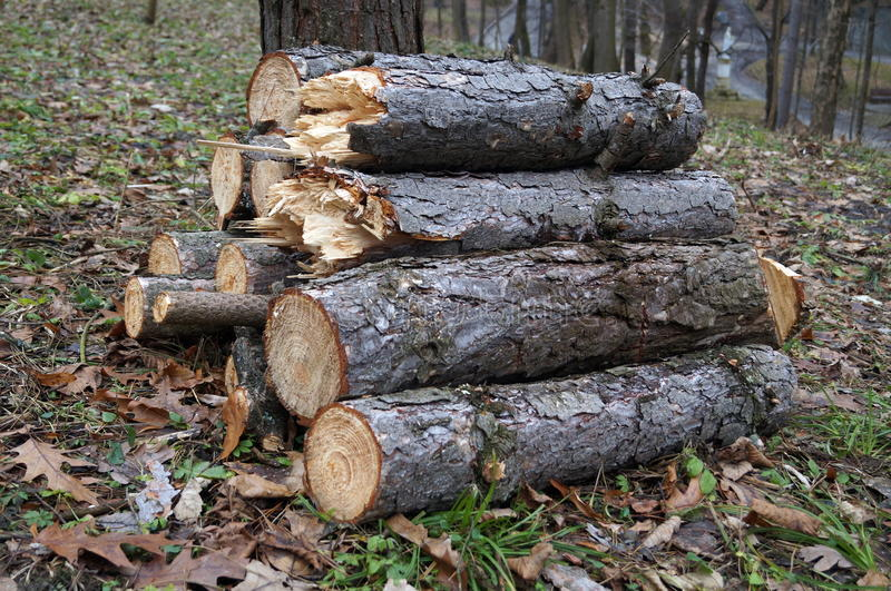 Logs stacked in a pile near a tree. Lying on the leaves and dry grass royalty free stock photos