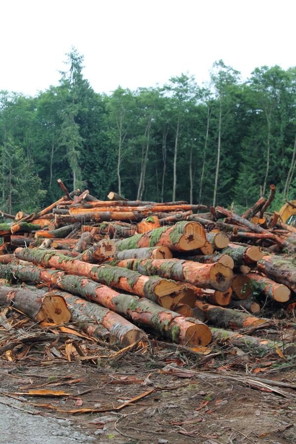 Logs stacked up in a Pacific Northwest forest logging operation. Freshly cut logs stacked up in a clearing in a Pacific Northwest forest clearcut logging royalty free stock photography