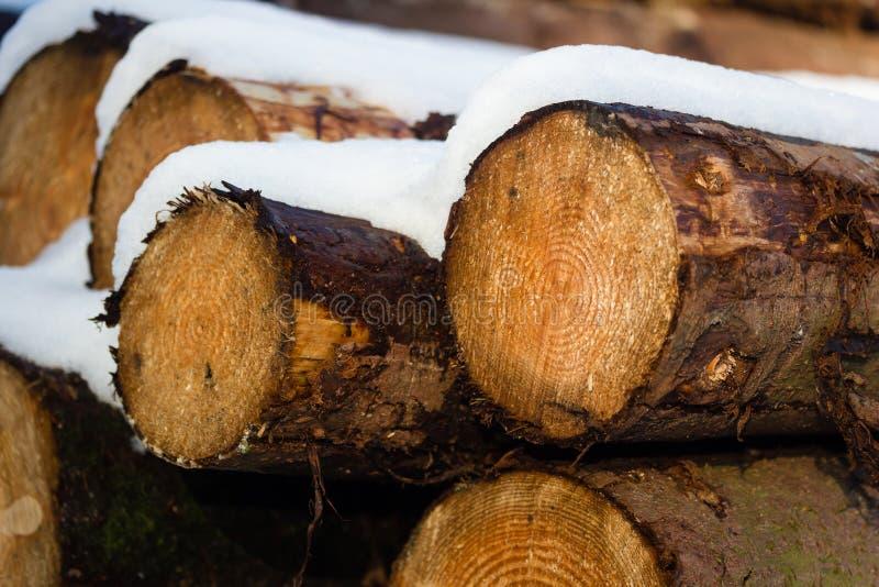 Logs täckte med snow royaltyfria bilder