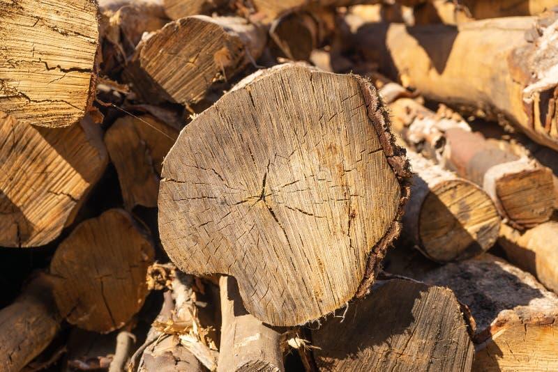 logs Texture organique naturelle avec des fissures et une surface approximative photos stock