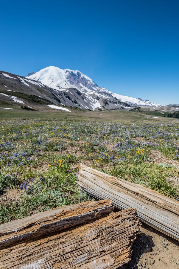 Logs and Wild Flowers Below Mount Rainier stock photos