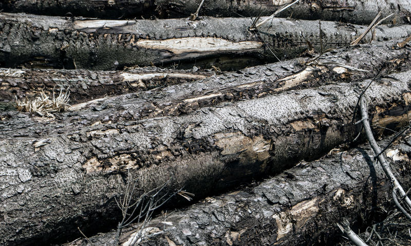 Logs of wood. Stacked together in a huge pile stock photos