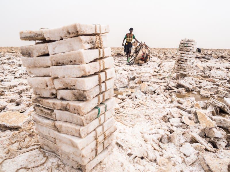 Loin hommes extrayant le sel des appartements de sel dans loin la région, département de Danakil photos libres de droits