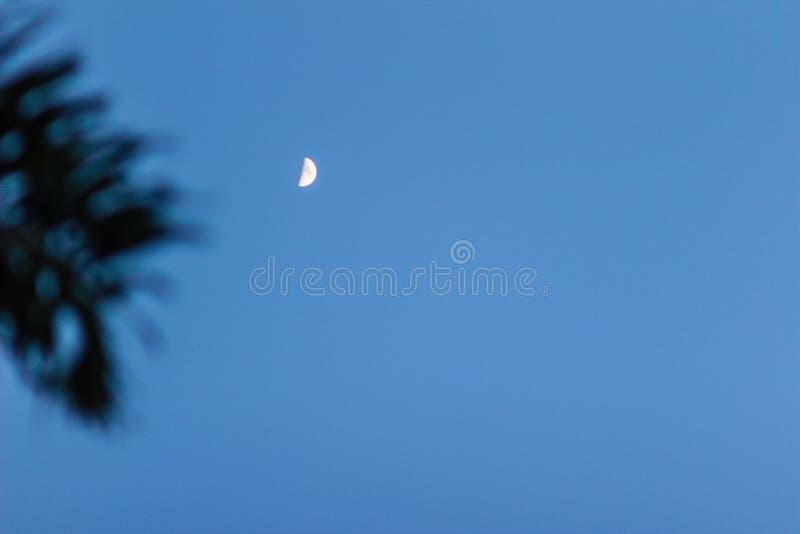 Loin la demi-lune et la paume de silhouette partent avec le fond de ciel bleu Résumé entouré par une petite silhouette de lune de images stock