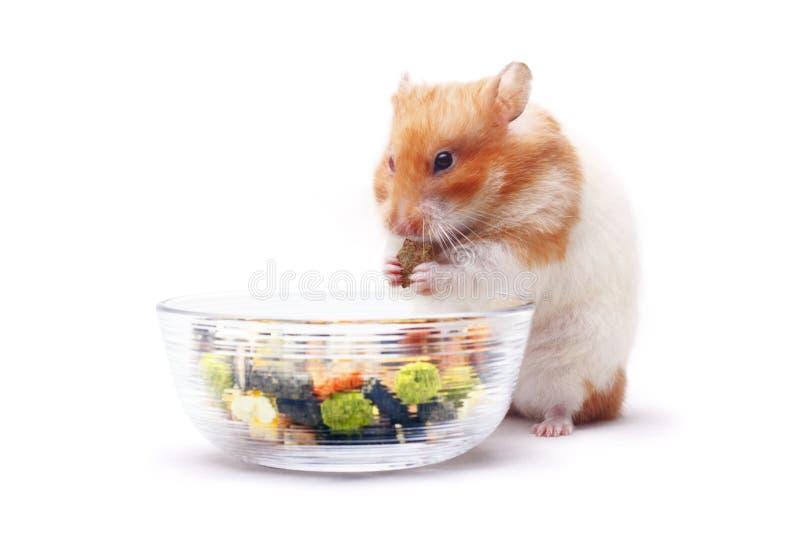 Lois de Hamster stock afbeelding