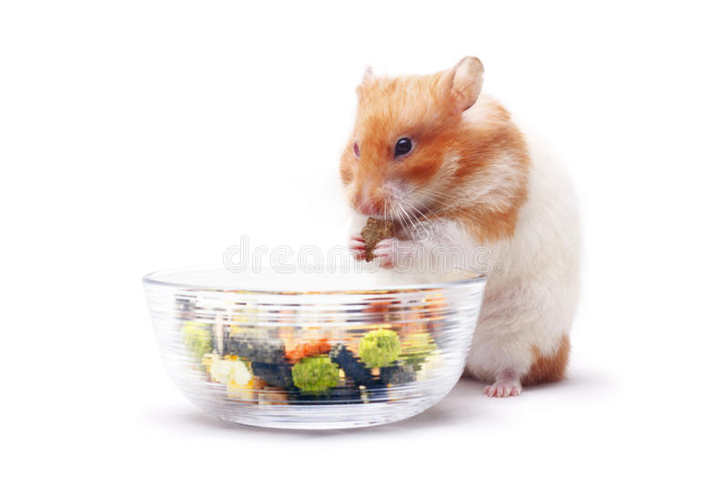 Lois le hamster image stock