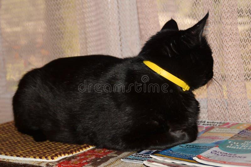 Lojal katt som väntar på hans ägare att gå tillbaka hem royaltyfri foto
