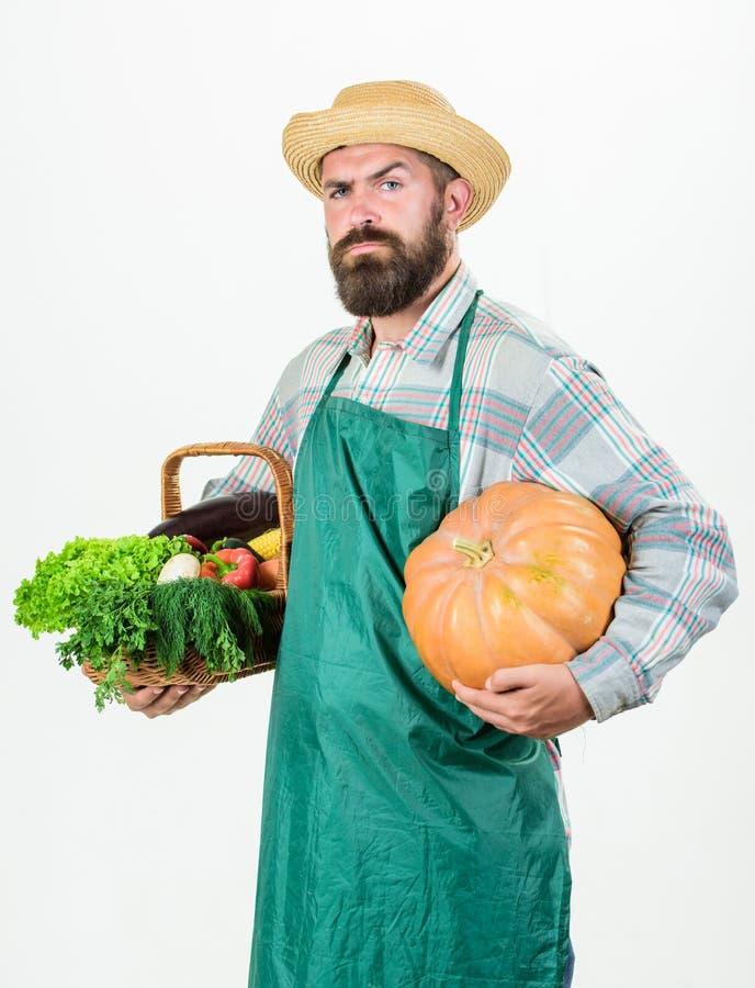 Lokal lantg?rd Yrkesm?ssig ockupation f?r bondelivsstil Lantbruk och jordbruk Vit för pumpa för håll för bondekläderförkläde royaltyfria foton