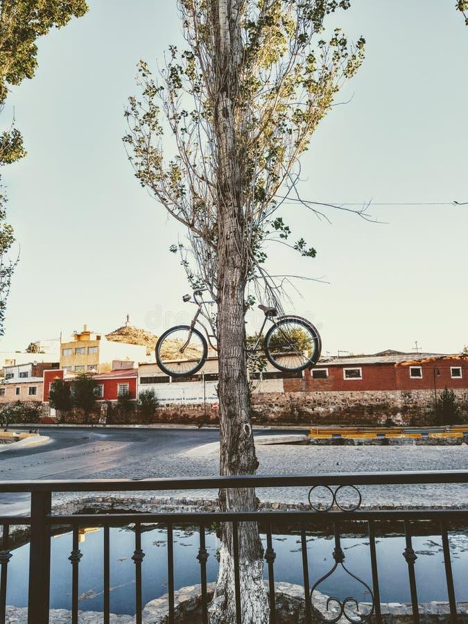 Lokal nyfiken cykelprydnad arkivfoto