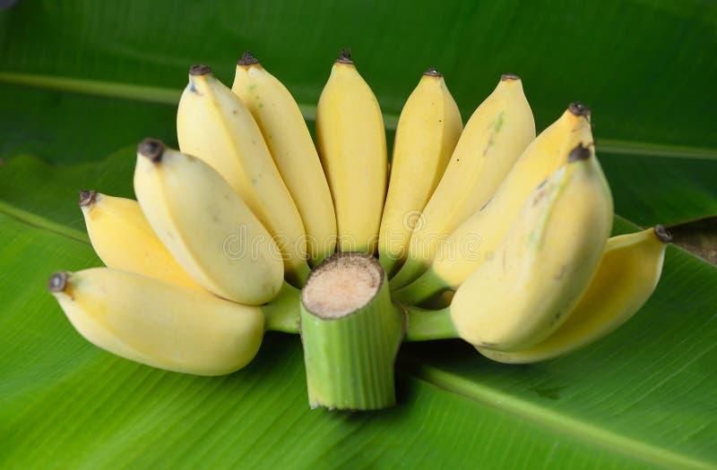 Lokal thailändsk banan arkivfoto