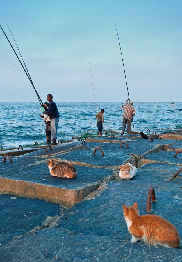 lokala egyptiska fiskare för katter arkivbild
