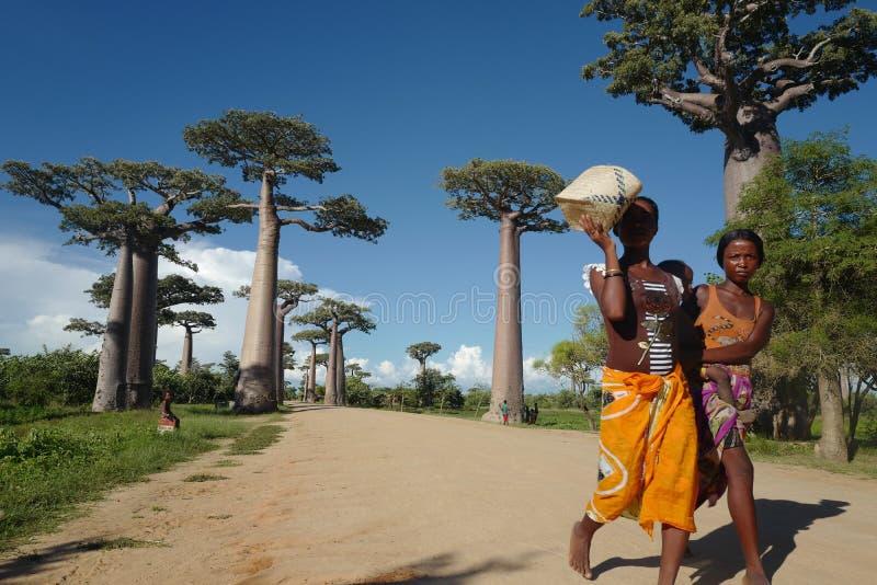 Lokala folk- och baobabträd i Morondava, Madagascar royaltyfria bilder