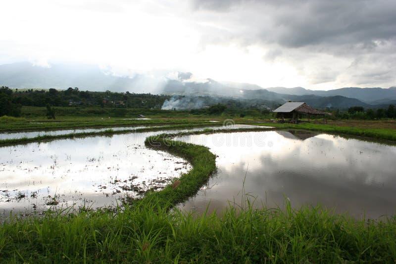 Lokala stugor i risfält royaltyfria bilder