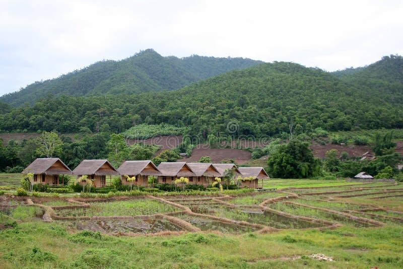 Lokala stugor och bungalower i risfält arkivfoto