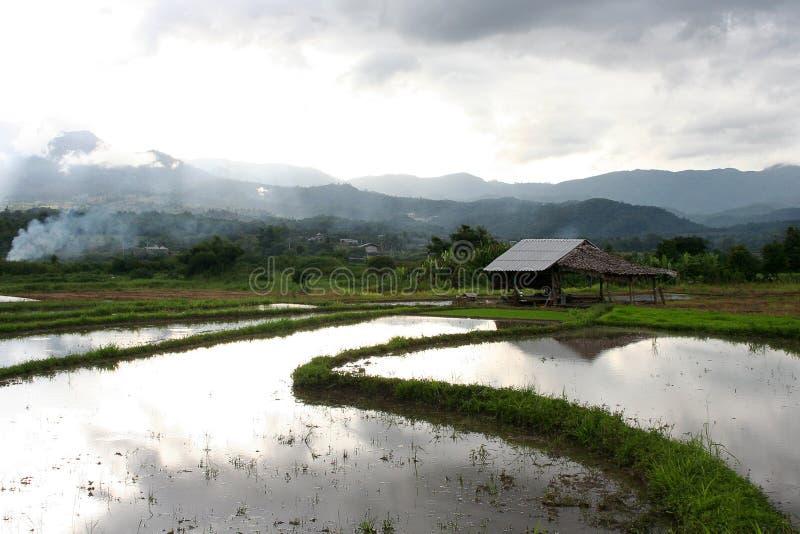 Lokale Häuschen in den Reispaddys lizenzfreie stockfotografie