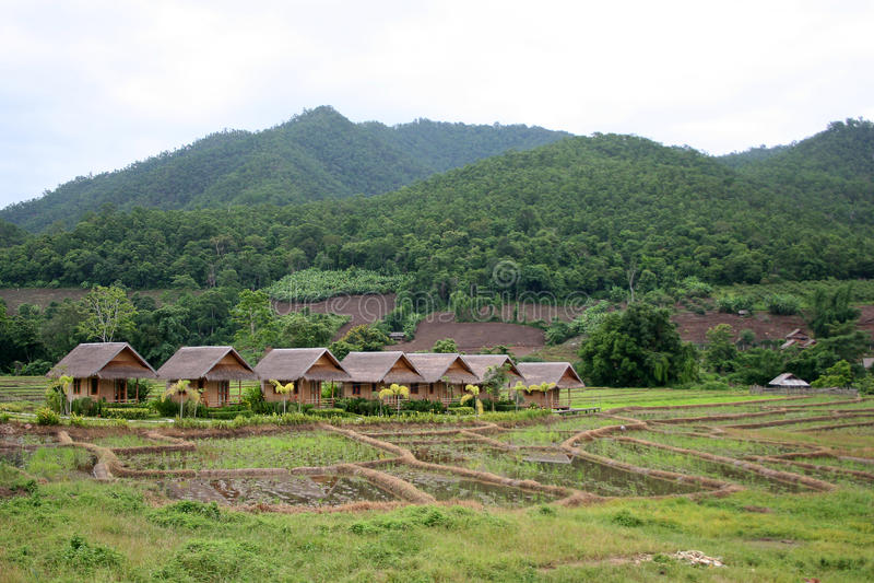 Lokale Häuschen und Bungalows in den Reispaddys stockfoto