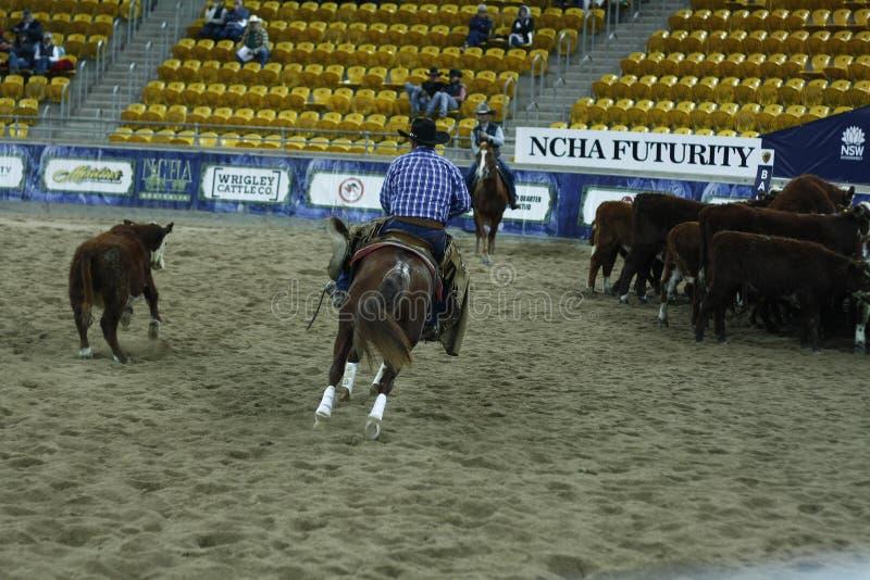 Lokale landbouwers die hun quaterhorses berijden, die bij een scherp paard, futurity concurreren stock afbeelding