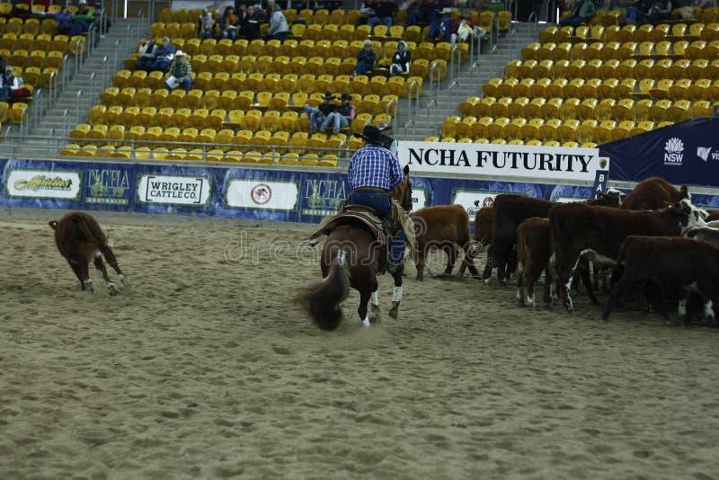 Lokale landbouwers die hun quaterhorses berijden, die bij een scherp paard, futurity concurreren royalty-vrije stock fotografie