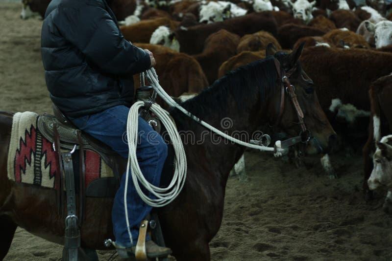 lokale landbouwers die hun quaterhorses berijden, die bij een scherp paard, futurity gebeurtenis concurreren royalty-vrije stock foto