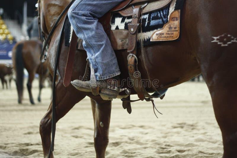 lokale landbouwers die hun quaterhorses berijden, die bij een scherp paard, futurity gebeurtenis concurreren stock afbeeldingen