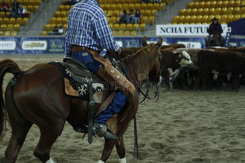 lokale landbouwers die hun quaterhorses berijden, die bij een scherp paard, futurity gebeurtenis concurreren stock afbeelding