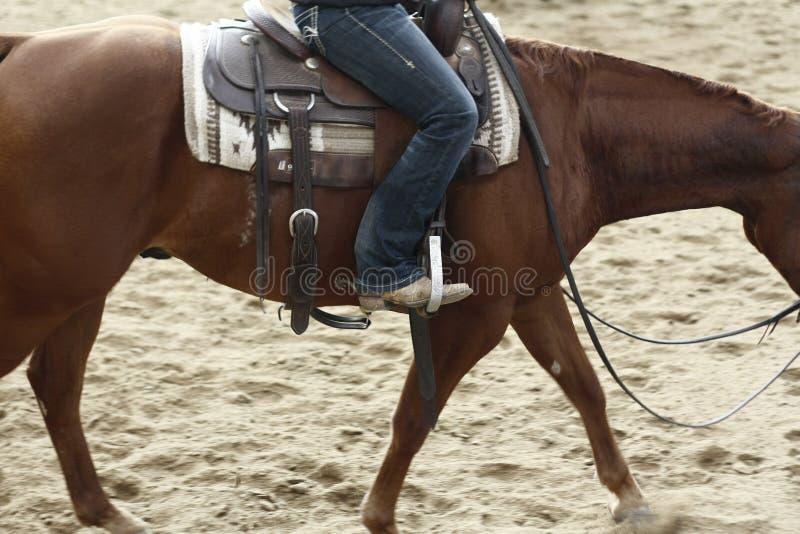 lokale landbouwers die hun quaterhorses berijden, die bij een scherp paard, futurity gebeurtenis concurreren stock fotografie