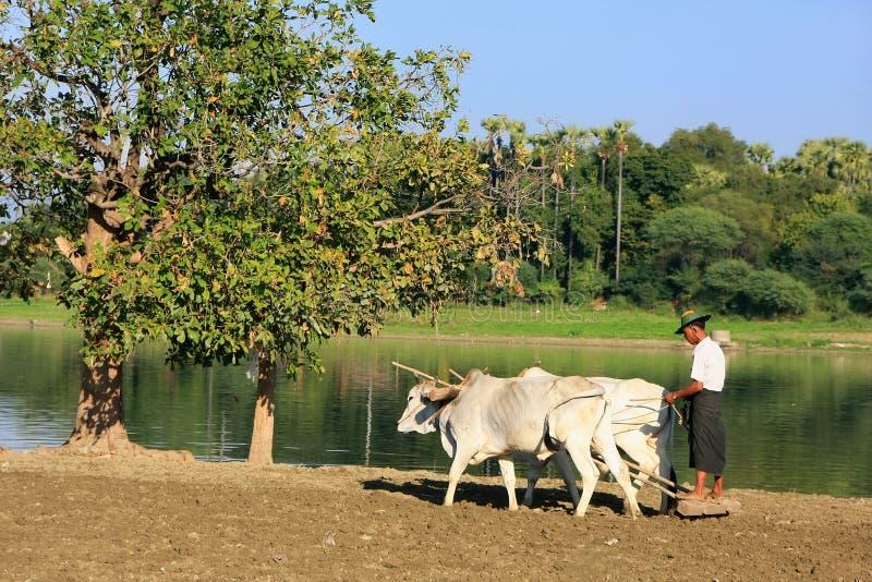 Lokale mens die aan een landbouwbedrijfgebied dichtbij meer, Amarapura, Myanmar werkt stock fotografie