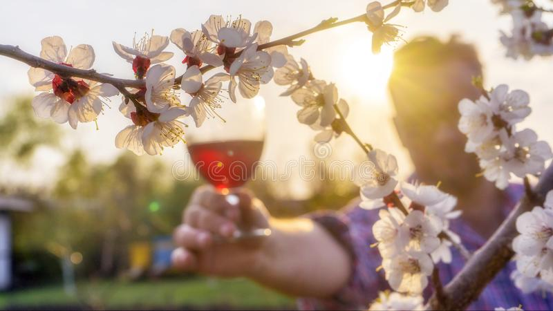 Lokale nadruk op het tot bloei komen sakura Op de achtergrond, houdt een winemaker een glas wijn royalty-vrije stock afbeelding