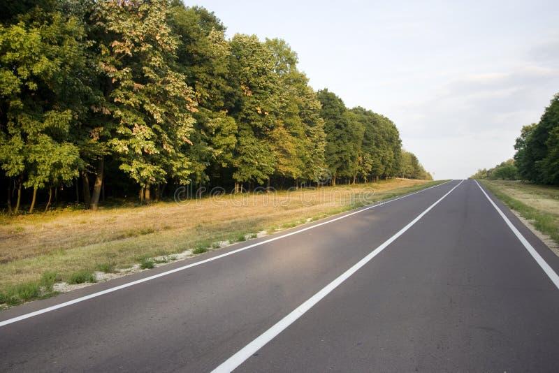 Lokale Straße durch den Wald lizenzfreie stockbilder