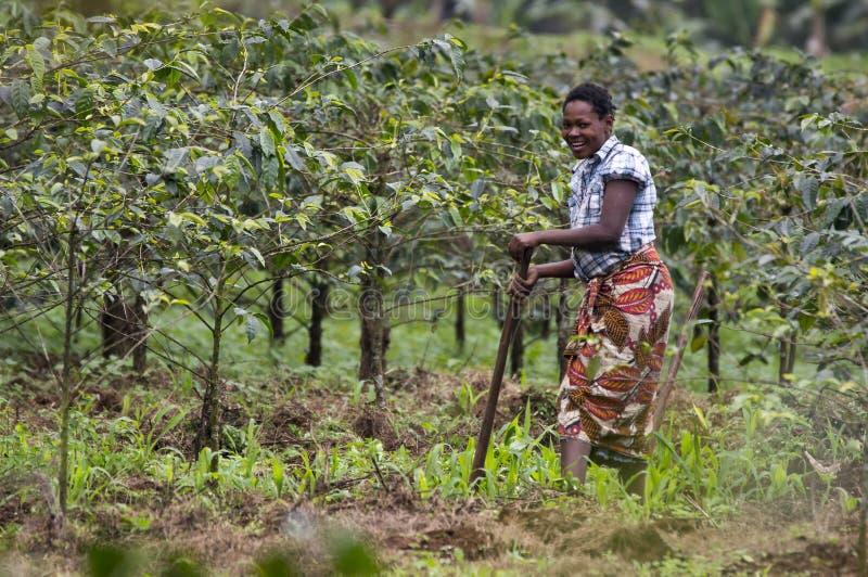 Lokale vrouw die aan de gebieden van de koffieaanplanting werken royalty-vrije stock fotografie