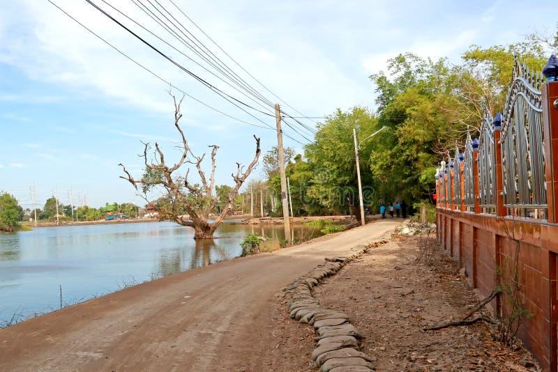 Lokale weg en dode boom in het meer met bezinning over blauwe hemel natuurlijke achtergrond stock foto's