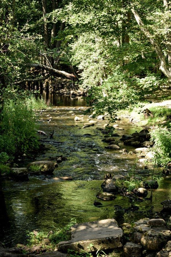 Lokale wildernissen in Kurzeme op de rivier Riva royalty-vrije stock afbeeldingen