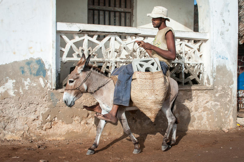 Lokaler som använder en åsna för transport i Lamu, Kenya fotografering för bildbyråer