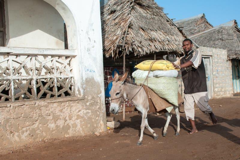 Lokaler som använder en åsna för transport i Lamu, Kenya royaltyfri fotografi