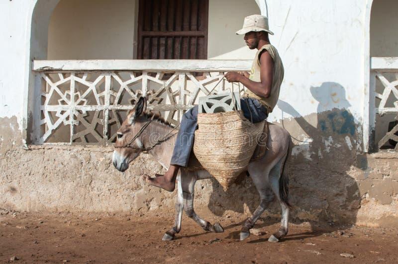 Lokaler som använder en åsna för transport i Lamu, Kenya royaltyfria foton
