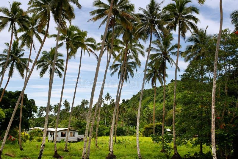 Lokales Haus in der Palmenwaldung, Insel Vanua Levu, Fidschi stockbilder