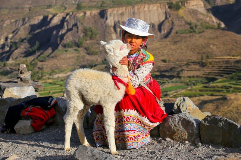 Lokales Mädchen mit dem Babylama, das an Colca-Schlucht in Peru sitzt stockfotos