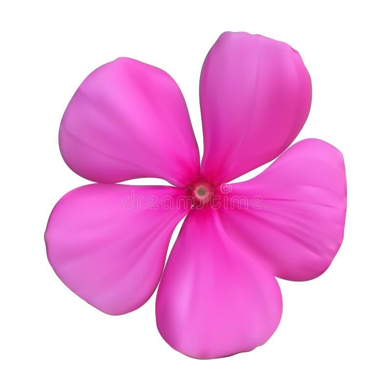 Lokalisierte bunte schöne naturalistische rosa Blume Vector Kranken vektor abbildung